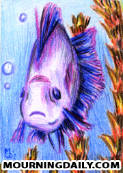 Fish By Mourning Daily